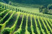 Weinwochen im Herbst